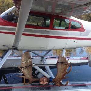 antlers in transport