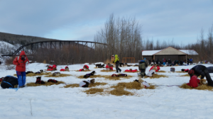 at-iditarod-checkpoint2015