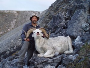 mountain sheep hunting