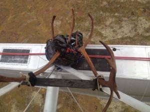 nelchina-caribou-hunting-3